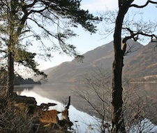 Jubilee Point on Loch Eck - a gloriously peaceful picnic spot just ten minutes from the lodge