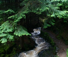 Puck's Glen - a journey through a mystically beautiful forest. 5 minutes from Feorag Lodge